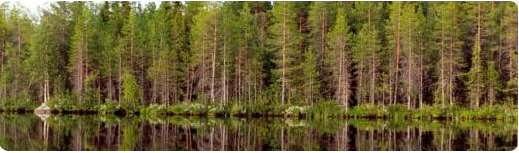 the forests of Latvia